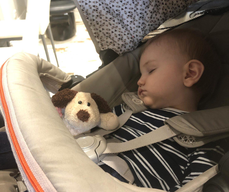 Ollie sleeps everywhere