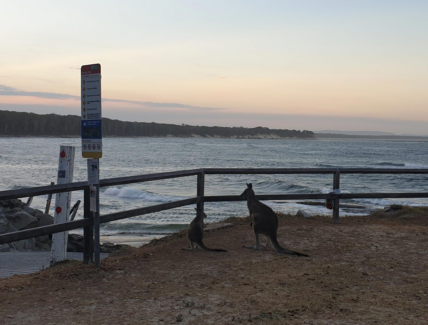 Byron Bay Sunset Kangaroos - Live Life and Roam