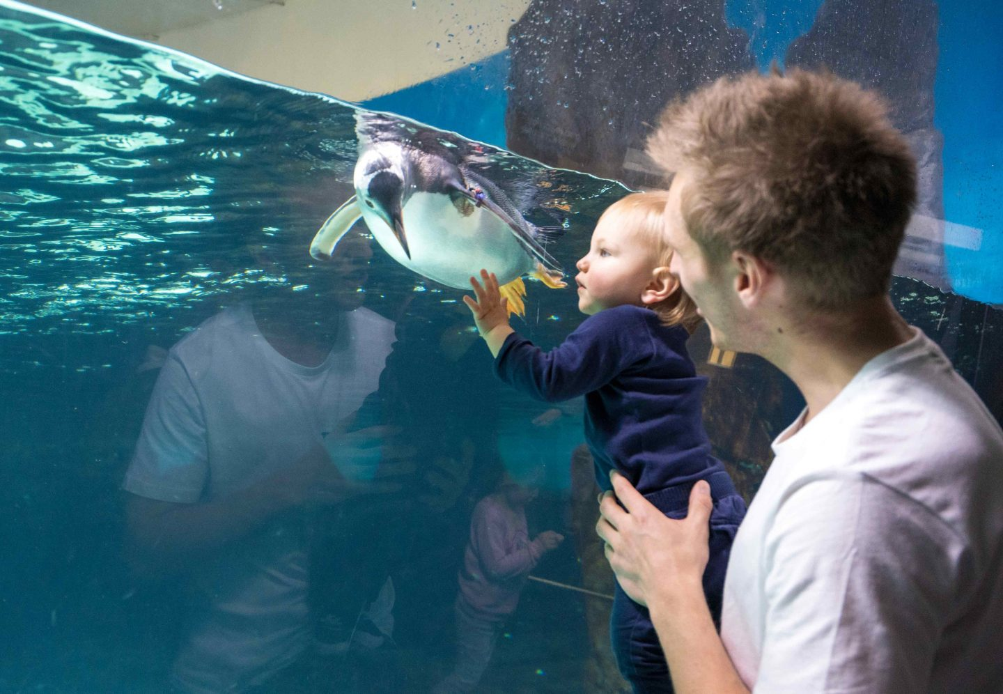 Oliver with Penguin - SEA LIFE MELBOURNE - LIVE LIFE AND ROAM