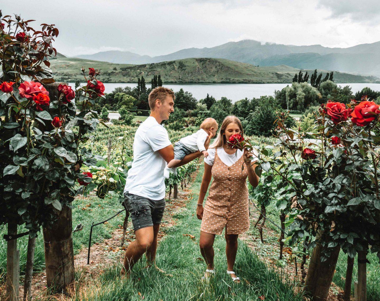 Vineyard - South Island New Zealand Road Trip - Live Life and Roam