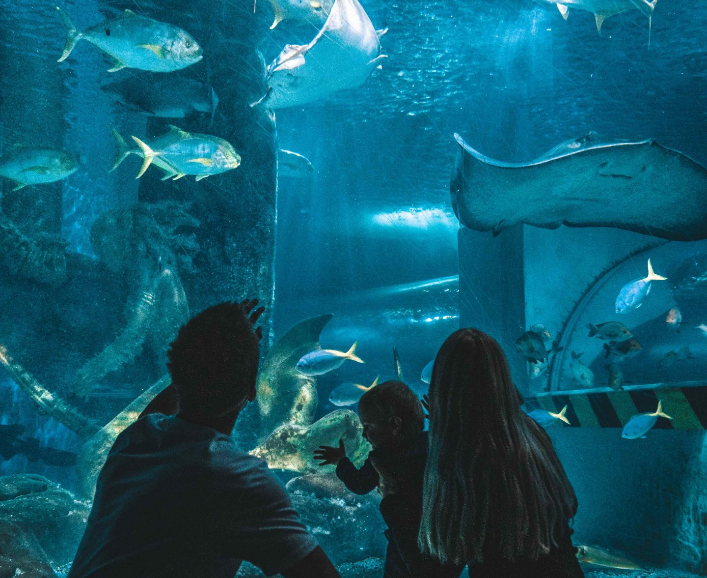 Under The Sea at SEA LIFE Melbourne Aquarium – The Guide You Need To Read!