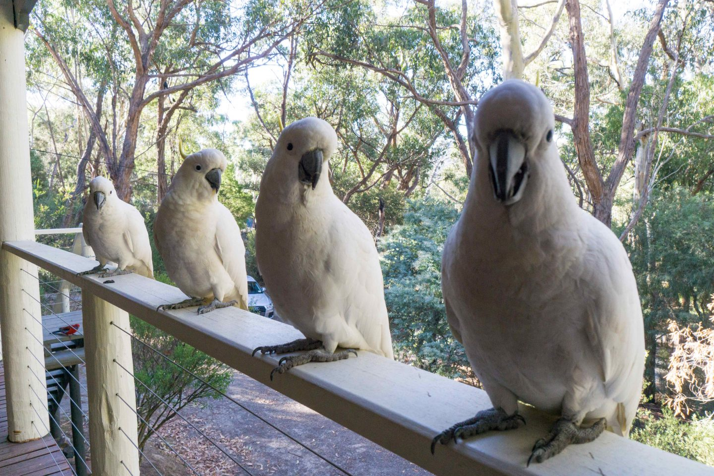 Cockatoo Balcony - The Grampians - Live Life and Roam